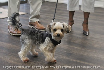 Greenbrier Veterinary Services - Ribbon Cutting