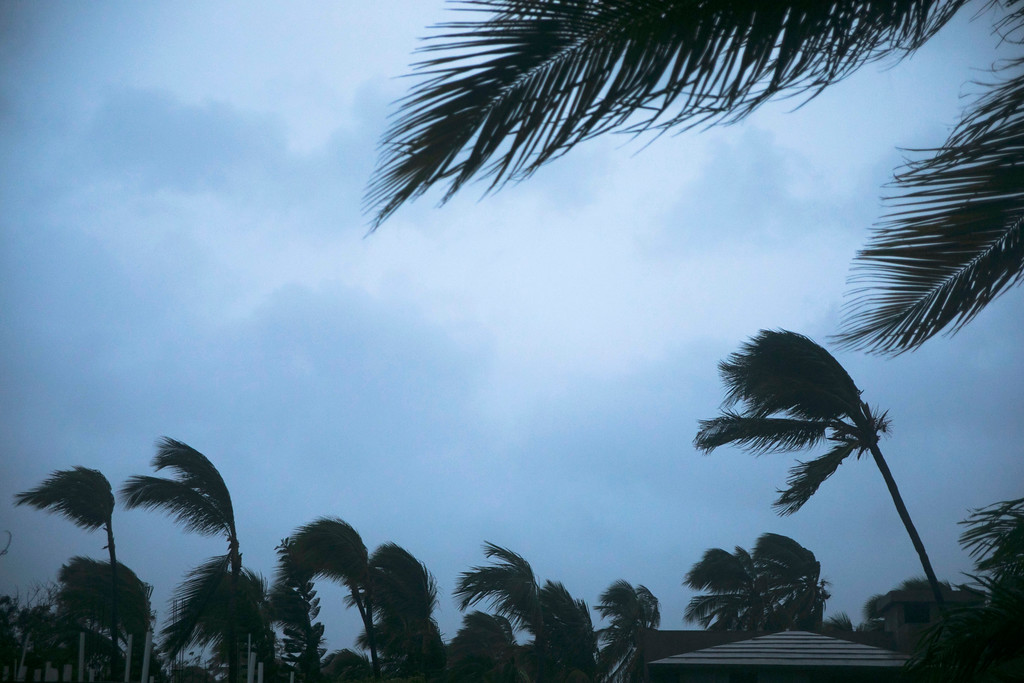 . Wind shakes palm trees as Hurricane Maria approaches the coast of Bavaro, Dominican Republic, Wednesday, Sept. 20, 2017. The U.S. National Hurricane Center says Maria has lost its major hurricane status after raking Puerto Rico. But forecasters say some strengthening is in the forecast and Maria could again become a major hurricane by Thursday. (AP Photo/Tatiana Fernandez)