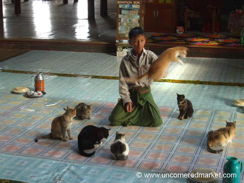 Jumping Cat - Inle Lake, Burma