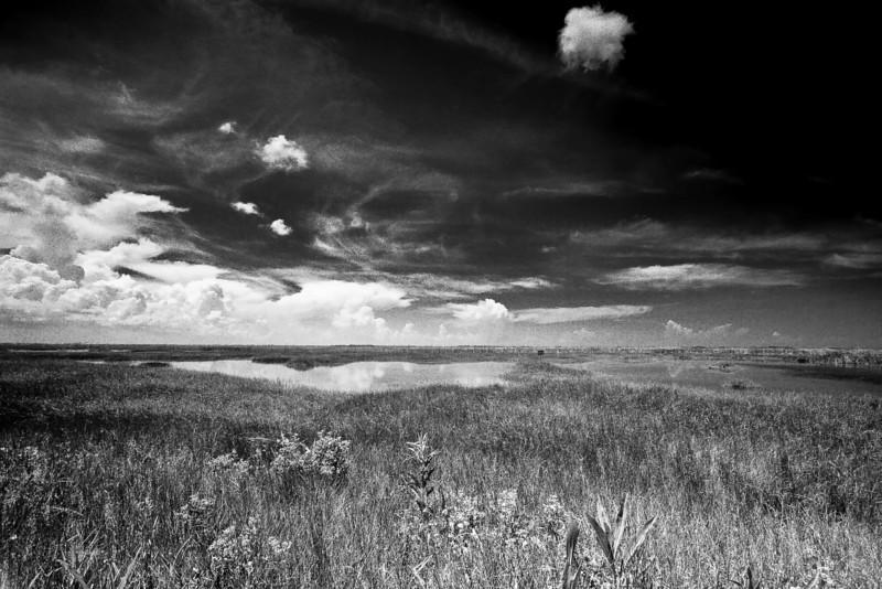 Everglades -22-Edit-Edit.jpg