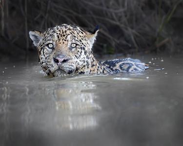 Pantanal Brazil (8/18)