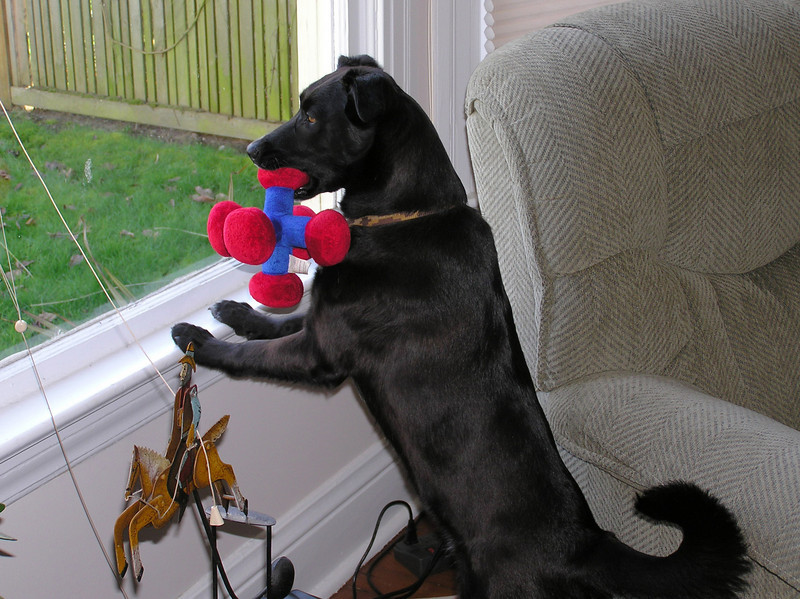 Play pup surveying the scene