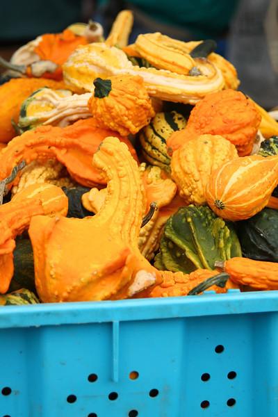 Beaverton Harvest Market 2011  3700.jpg
