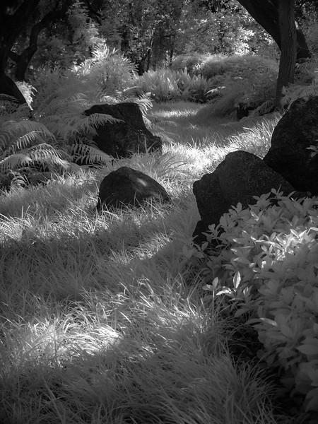 06_09_16 huntington gardens  0288.jpg