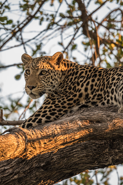 Botswana_June_2017 (3679 of 6179).jpg