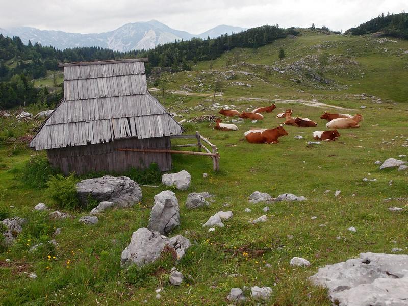 Velika Planina Kamnik 29-06-14 (19).jpg