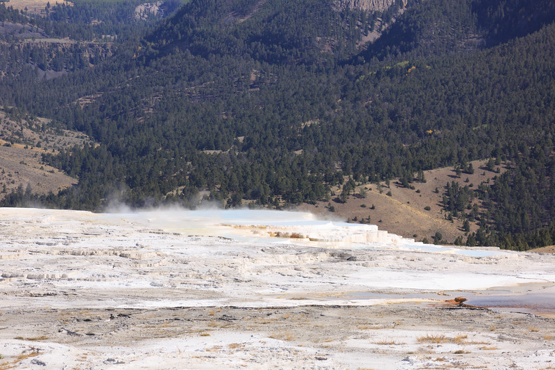 Mammoth Hot Springs 012