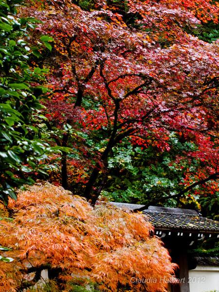 Oregon_Oct_2011-13-7.jpg