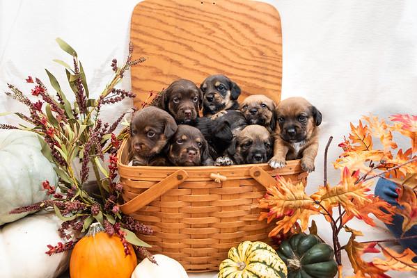 L puppies