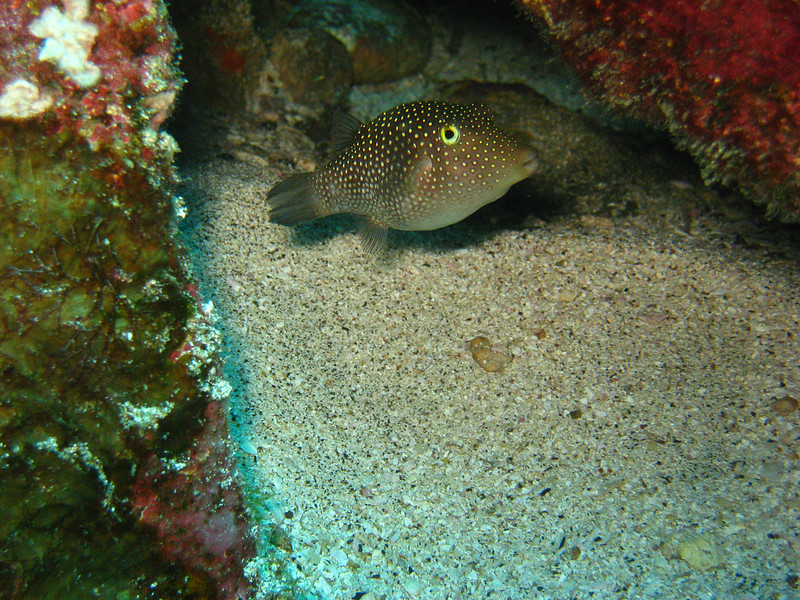 Diving in the Galapagos (354 of 392)