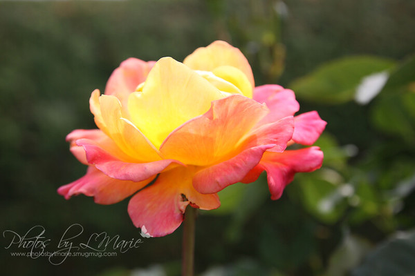 Leif Erickson Park & Rose Garden