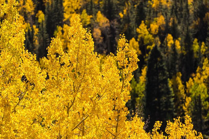Colorado19_5D4-1142.jpg