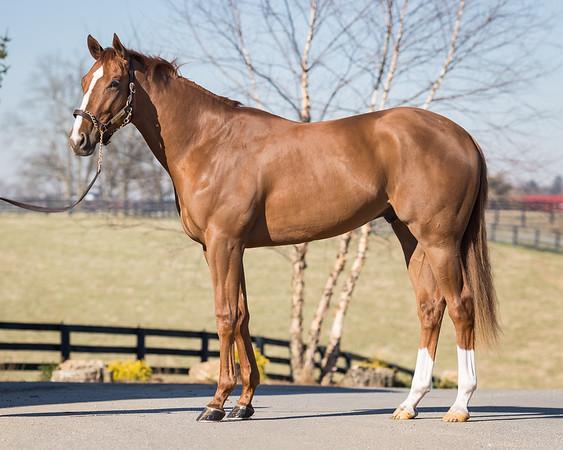 Margaux Horses '19