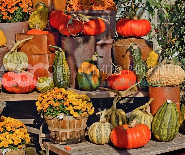 Autumn-Gourds-Background_batch_batch.jpg