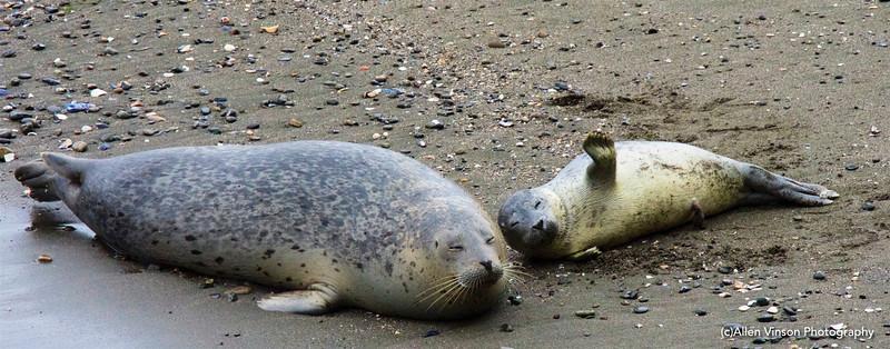 Seal Pups 4-11-16