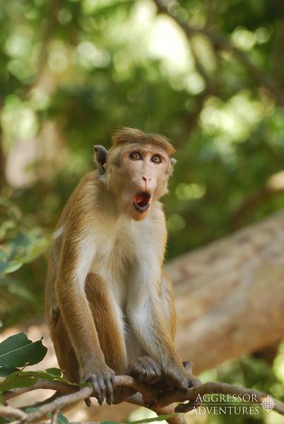 srilanka-animals-wm3.jpg