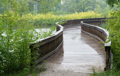 Forest Park August 7 2014 in the rain