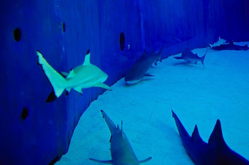 LB-Aquarium-II_12.jpg