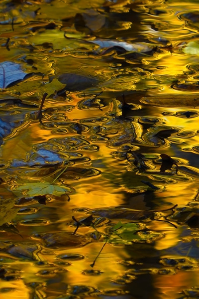Autumn Abstracts & Reflections
