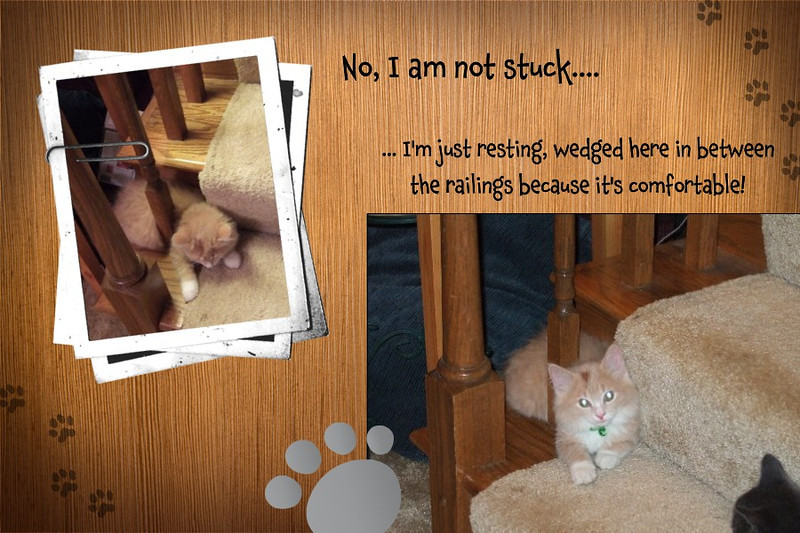 Life and Times of Fozzy - I'm not stuck...