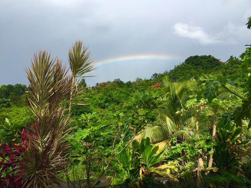 Rainbow over the Rainforest in Rincon PR.jpg