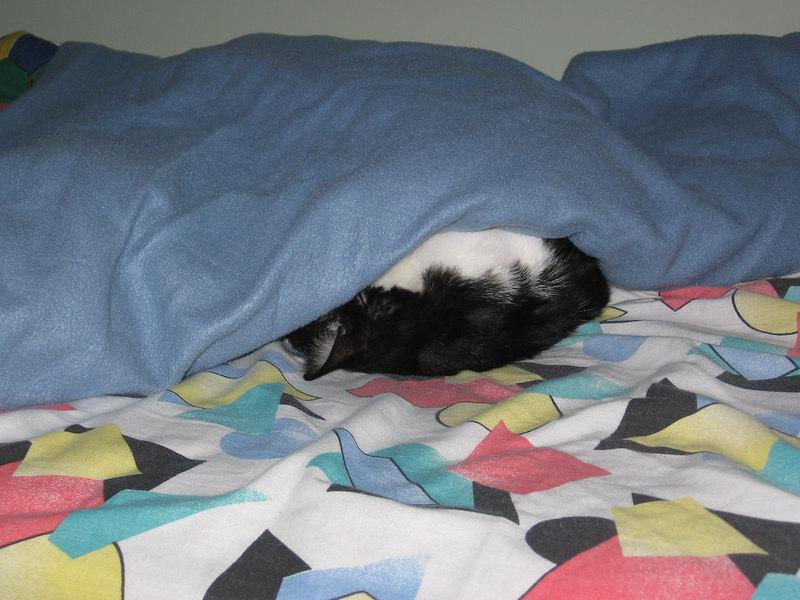Storm in Gavin's Bed