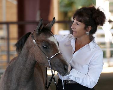 2010 Arabian Horse Community show Saturday