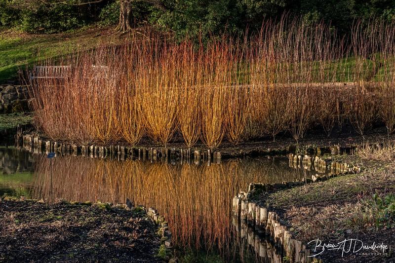 Wakehurst-8.jpg