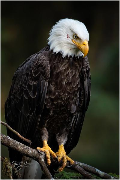 J85_7386 Eagle LPN W.jpg