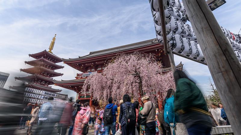 Crowds admire || Senso-ji