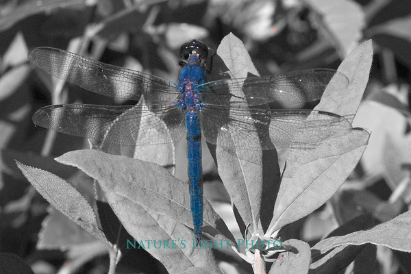 Blue on Gray-9357.jpg