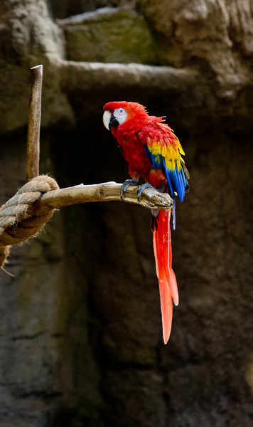 zoo-1568.jpg