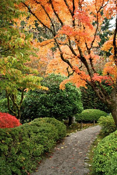 Portland Japanese Garden  11-11-11  3553.jpg