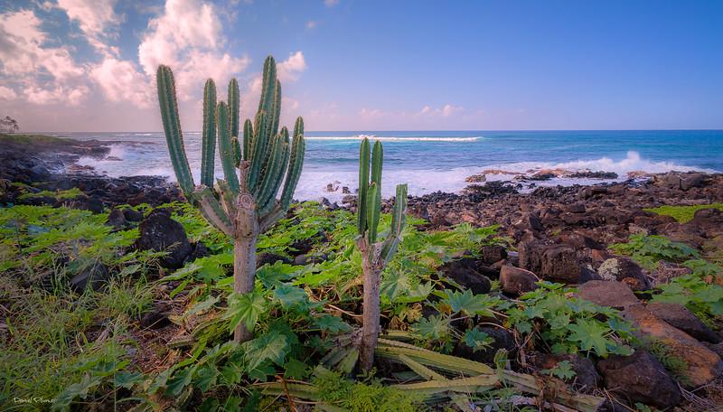 Ocean Cactus