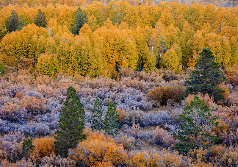 Conway_Summit_Fall_Color_Eastern_Sierra_California_Trees_T6A4273-Pano.jpg