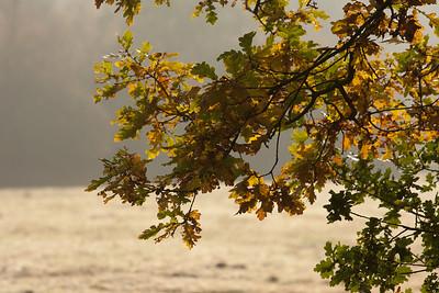 Marum in de herfst