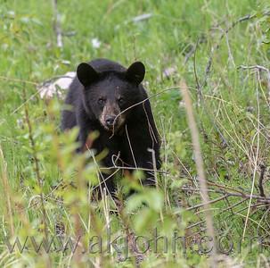 BLACK BEAR FAMILY PHOTOS