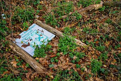 Forêt de Fontainebleau #2