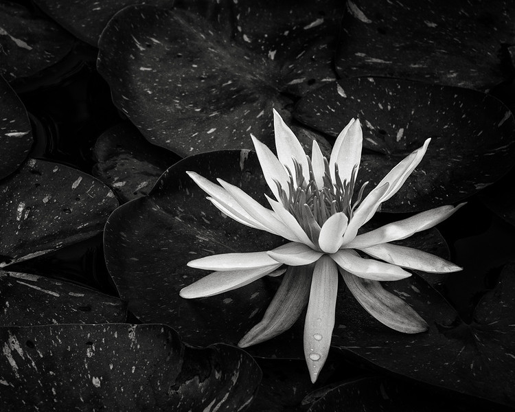 lotus-13.jpg
