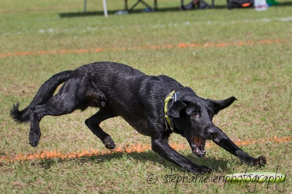 _MG_3046Up_dog_International_2016_StephaniellenPhotography.jpg
