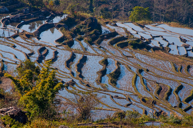 china-Xinjie-Rice-Terraces-5173.jpg