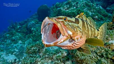 Sea Dragon - Bahamas