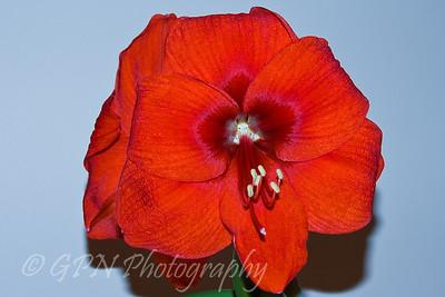 Indoor Flowers 2008