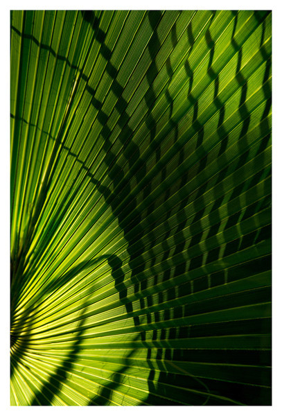Palm leaf near the Alamo