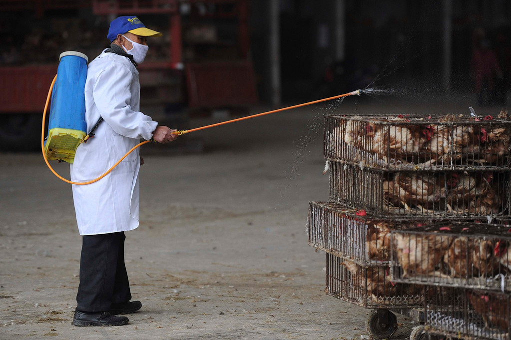 . An employee wearing a protection suit sprays disinfectant on chickens at a poultry market in Hefei, Anhui province April 5, 2013. Chinese authorities were slaughtering birds at a poultry market in the financial hub Shanghai as the death toll from a new strain of bird flu mounted to six on Friday, spreading concern overseas and sparking a sell-off on Hong Kong\'s share market. According to Xinhua News Agency, east China\'s Zhejiang Province on Friday morning reported that a man has died from the H7N9 bird flu, bringing the death toll from the new deadly strain to six in the country. REUTERS/Stringer
