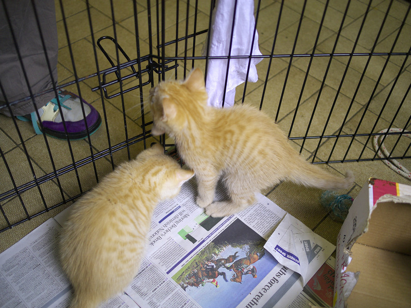 Kittens at 21. Becky really liked the two ginger ones.