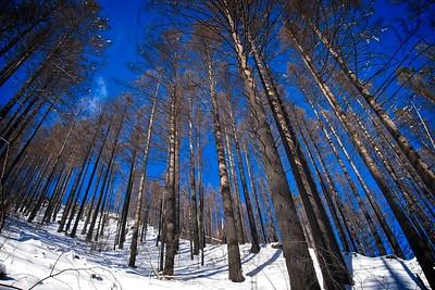 A snowy Multnomah - Wahkeena Loop - 2019/02/10