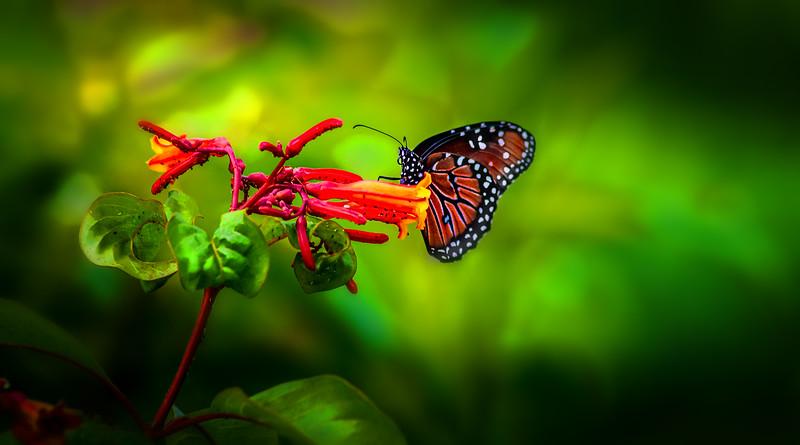 Butterflies-008.jpg
