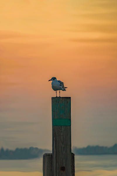 Smudge Painted Sea Gull Sunset.jpg
