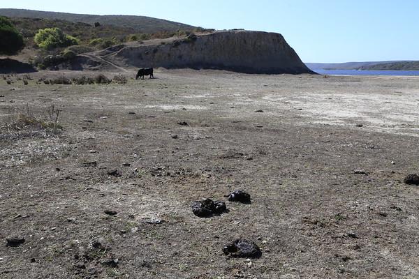 Schooner  Bay - Drakes Estero Oct 2021